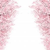 foto of row trees  - Rows of Beautiful Cherry Blossom trees vector art and illustration - JPG