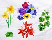 stock photo of ivy  - Flower grass set drawn watercolor blots and stains with a spray daffodils - JPG