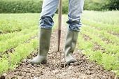stock photo of work boots  - Close Up Of Farmer Working In Organic Farm Field - JPG