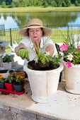 stock photo of rich soil  - Attractive senior lady in a straw sunhat potting up houseplants in large planters to display on her outdoor patio filling the pot with rich organic soil and compost - JPG