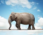 stock photo of risk  - Elephant balancing on a tightrope concept for risk - JPG