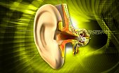 stock photo of eardrum  - Digital illustration of Ear anatomy on colored background - JPG