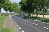 stock photo of interrupter  - Asphalt road with black surface runs through row of trees - JPG
