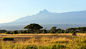 stock photo of kilimanjaro  - Amboseli National Park and Mount Kilimanjaro in Kenya - JPG