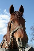pic of workhorses  - A portrait of a workhorse  - JPG