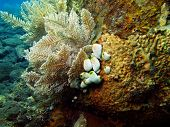 picture of squirting  - The surprising underwater world of the Bali basin - JPG