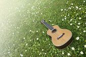 picture of ukulele  - Bright and sunny concept in springtime with an isolated ukulele on green grass and flowers - JPG