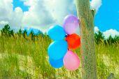 stock photo of dune grass  - Concept of love in summer freedom and wedding honeymoon - JPG