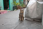 stock photo of animal cruelty  - Homeless old cat sit for take a photo
