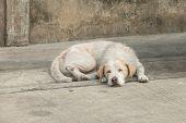 stock photo of homeless  - Homeless dog sleep on dirty street so tired - JPG