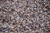 picture of rape-seed  - Seeds and grains of various agricultural crops - JPG