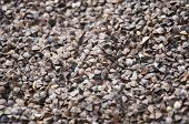 stock photo of rape-seed  - Seeds and grains of various agricultural crops - JPG