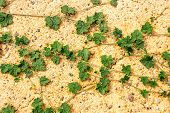 stock photo of ivy vine  - close up green ivy on sand for natural background - JPG