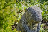 stock photo of garden sculpture  - Stone beaver among garden plants - JPG
