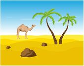image of oasis  - Camel and palms in the Desert - JPG