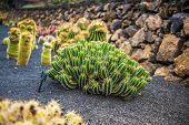 stock photo of cactus  - View of cactus garden - JPG