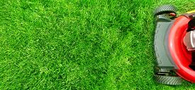 image of grass  - Lawn mower cutting green grass in backyard - JPG