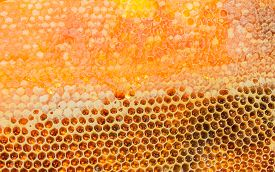 picture of honeycomb  - Honeycombs filled with honey closeup - JPG