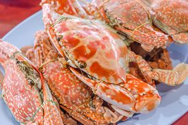 picture of cooked blue crab  - steamed flower crab or blue crab blue manna crab sand crab - JPG