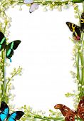 picture of yellow flower  - Lilies of the valley frames with colorful butterflies on white background - JPG