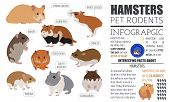 Pets_rodents_guinea Pig_7 poster