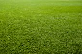 pic of lawn grass  - Green grass texture of a soccer field - JPG