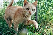 Curious red cat in garden poster