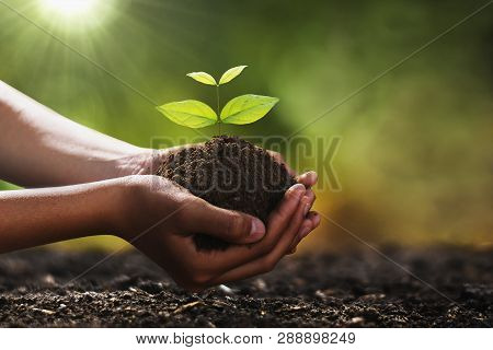 Hand Holding Small Tree For