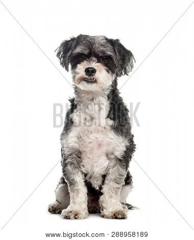 poster of Mixed-breed dog, 6 years old, sitting in front of white background