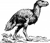pic of dodo  - Dodo going on the ground on white background - JPG