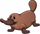 foto of platypus  - Cute cartoon platypus - JPG