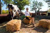 stock photo of milkmaid  - Business woman with laptop milking cow on farm - JPG