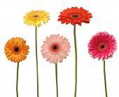 Постер, плакат: пять цветов изолированные на белом