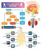 Fight Or Flight Response Vector Illustration. Labeled Organ Response Scheme In Danger Situations. Ch poster