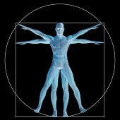image of leonardo da vinci  - High resolution Vitruvian human or man as concept - JPG