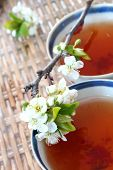 Tea And Blossom