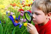 picture of observed  - Six years old boy in the spring garden observing a butterfly on flower through a magnifying glass - JPG