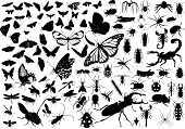 foto of gad  - 100 vector silhouettes of insects  - JPG