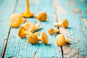 stock photo of crimini mushroom  - organic fresh chanterelle mushrooms on a wooden background - JPG