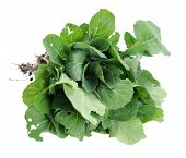 image of gai  - a bunch of organic Brassicaceae (gai lan) tree isolated on white