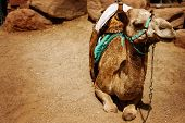 picture of desert animal  - Travel vintage background - JPG