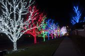 stock photo of row trees  - This is a row of trees that are decorated with christmas lights at night.