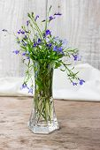 picture of lobelia  - Bouquet of lobelia in a glass vase isolated on white background - JPG