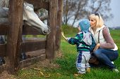 picture of feeding horse  - Mother with two - JPG
