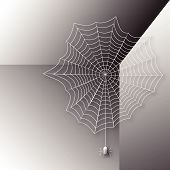 stock photo of black widow spider  - Spider in a web woven corner of the room - JPG