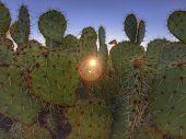 stock photo of morning sunrise  - Prickly desert cactus with morning sunrise peaking through - JPG