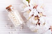 image of sugar industry  - flower therapy macro homeopathic bottle alternative homeopathy - JPG