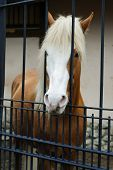 stock photo of brown horse  - Beautiful view of white and brown horse  - JPG