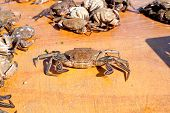 stock photo of caught  - Big Fresh crab caught in the morning  - JPG