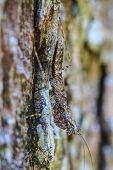 foto of leaf insect  - insect on leaf Grasshopper perching on a tree - JPG